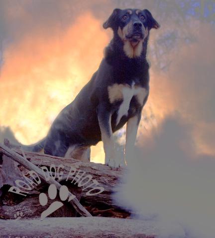 dog photo road - photo #24